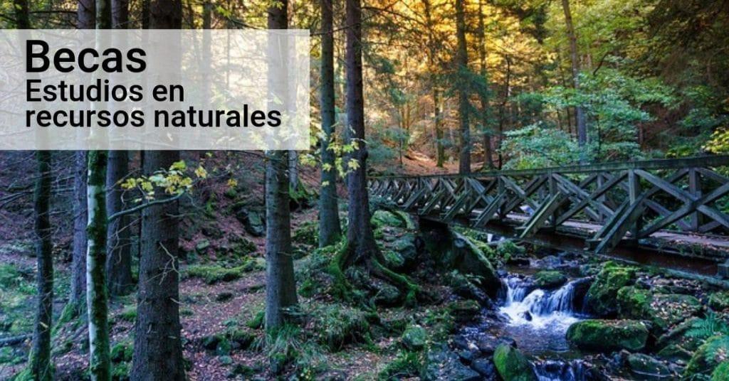 Becas cursos cortos en ciencias forestales o gestión de recursos naturales