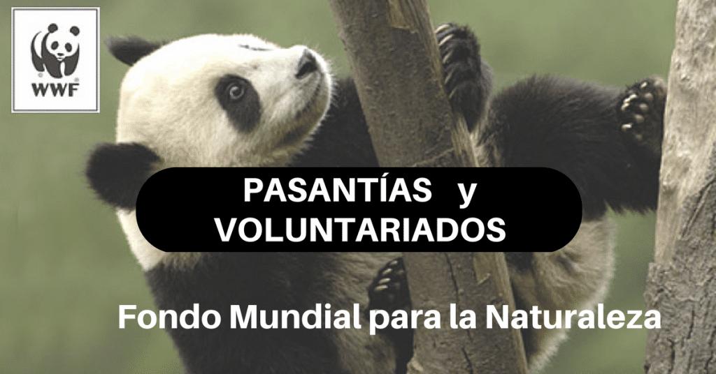 Pasantías y Voluntariados con el Fondo Mundial para la Naturaleza – WWF